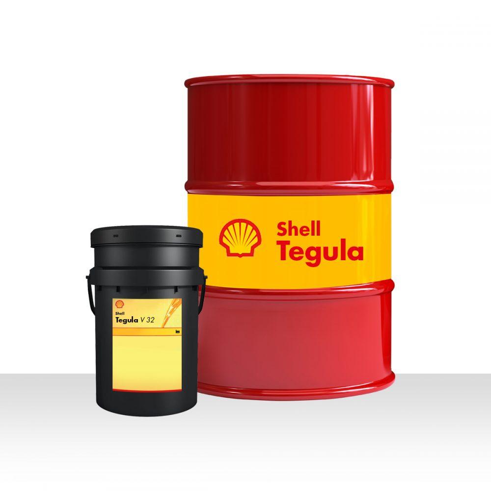 Shell Tegula V 32